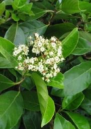 Φυτώρια βασιλάκος - vasilakos plants and nursery
