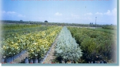 Vasilakos Plants and nursery gardens